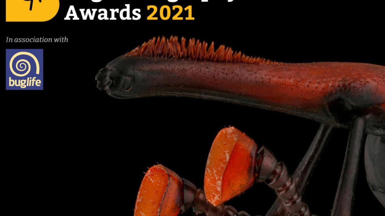 Bug Photography Awards